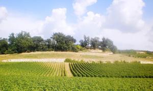 Lạc giữa cánh đồng nho St Emilion