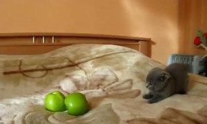 10 clip mèo được chia sẻ nhiều nhất YouTube