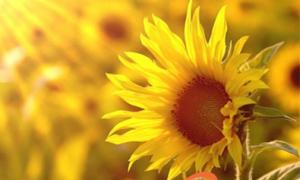 Hoa nở giữa tháng năm cô đơn