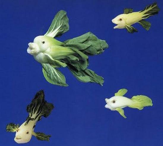 Cải chíp xanh biến thành đàn cá bơi lội tung tăng.