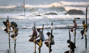 Xem người Sri Lanka câu cá trên kheo