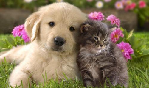 animallove1-640632-1368264949_600x0.jpg