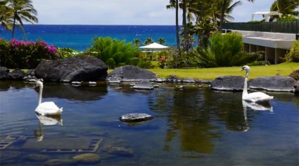 Kaua'i, Hawaii (xem clip)