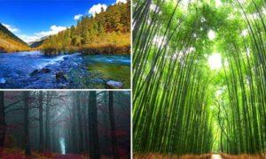 10 khu rừng đẹp lạ trên thế giới