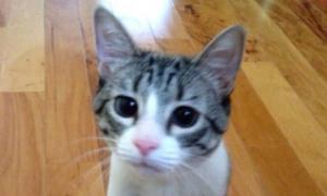 Chú mèo cụt chân có 50.000 người hâm mộ trên mạng xã hội