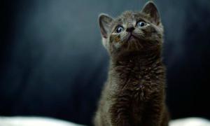 Mèo sống sót sau một tuần nằm dưới nắp capo xe hơi
