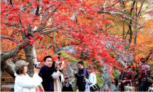 Mùa thu đẹp như 'ngôn tình' ở cố đô Kyoto Nhật Bản