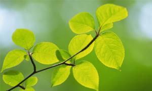 Cuộc đời hãy như là lá, sống thì phải xanh