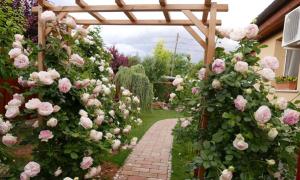 Mẹ Việt ở Hungary dành 22 năm gây dựng vườn hồng cổ tích