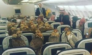 Hoàng tử Saudi mua 80 ghế khoang hạng nhất cho chim ưng