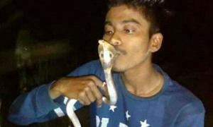Thanh niên mất mạng vì cố hôn rắn độc để chụp ảnh