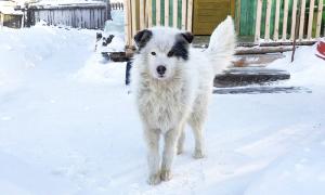Chó sưởi ấm cứu bé trai suốt hai ngày dưới trời âm độ
