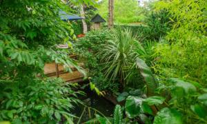 Ông bố dành 20 năm để biến vườn nhà thành rừng mưa bí mật