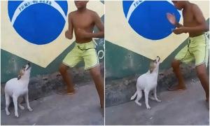 Chó cùng chủ nhún nhảy theo điệu nhạc hút triệu lượt xem