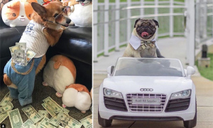 Cuộc sống xa hoa của những con chó nhà giàu