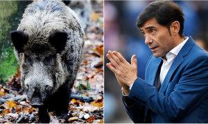 HLV Valencia nhập viện vì đâm phải lợn rừng