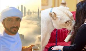 14 hiểu lầm về Dubai mà đa phần mọi người đều tưởng thật