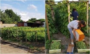 Đại gia đình 14 người Việt tại CH Czech không ăn hết rau trong khu vườn tự trồng