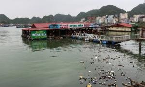 Vịnh Cát Bà ngập rác thải, cá chết