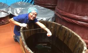 Kỹ sư bỏ việc lương nghìn USD về quê cứu nước mắm truyền thống