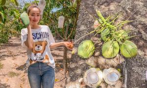 Minh Hằng hái dừa, bắt cá trong mảnh vườn ở ngoại ô