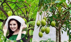 Vườn rau, cây ăn trái trong biệt thự triệu đô của Vy Oanh