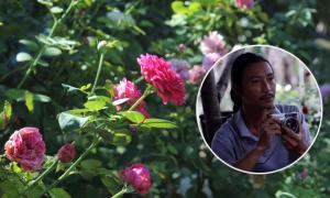 Chàng họa sĩ trồng hơn 1.000 gốc hồng