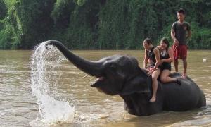 Tắm cùng voi ở trang trại gần Bangkok