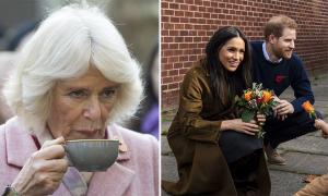 Bà Camilla hủy dự sự kiện chung với vợ chồng Meghan