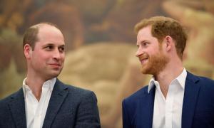 William khuyên Harry về Anh
