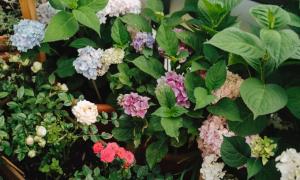 Muôn hoa đua nở ở vườn ban công 8 m2