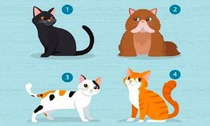 Chọn mèo để biết điều bạn cần từ 'nửa kia'