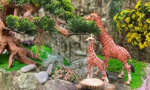 Vân Trang tự làm mô hình rừng nguyên sinh cho con gái