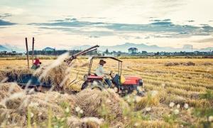 Mùa gặt đẹp như tranh ở Huế