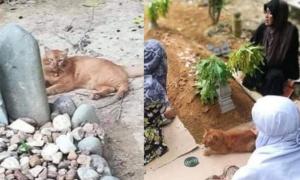 Mèo ngày ngày thăm mộ chủ suốt 2 năm