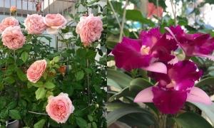Vườn sân thượng quanh năm nở hoa của mẹ Sài Gòn