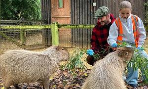 Becks và con gái cưng làm người trông nom vườn thú