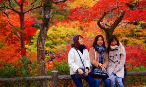 Thú theo dõi sự đổi màu của lá cây mùa thu ở Nhật Bản