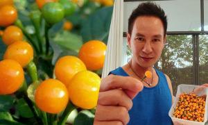 Lý Hải lần đầu ăn ớt giá nửa tỷ đồng mỗi kg