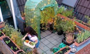 Vườn nhỏ thơ mộng trên ban công nhà phố