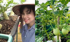 Vườn rau trái bốn mùa xanh tốt của chị gái Anh Thư