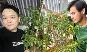 Sao Việt đua nhau trồng cây ớt đắt nhất thế giới