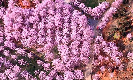 Bức tranh mùa xuân ngập sắc hoa đào ở Trung Quốc