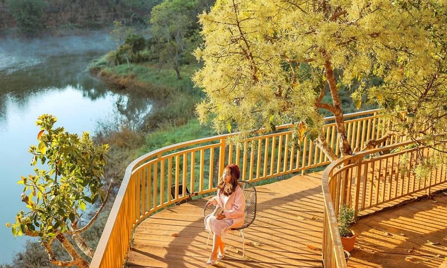Mùa hoa bơ trổ vàng ươm ở Đà Lạt