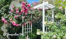 Vườn cổ tích hoa nở bốn mùa của mẹ Việt ở Mỹ