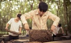 Hành trình viết tên trên bản đồ mật ong thế giới của Tracybee