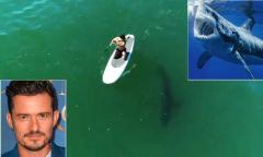 Orlando Bloom chèo ván cạnh cá mập trắng