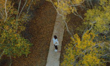 Thu vàng trong rừng Rú Chá