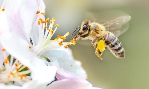 10 điều thú vị về loài ong